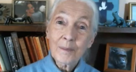 Video Message from Jane Goodall for our enclosure for Escape Artists