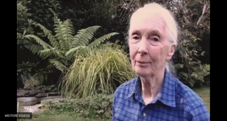 Jane Goodall's Video message for donations for Milla and other escape artists
